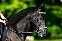 NODA Dressage Ride-a-Test July 8, 2017